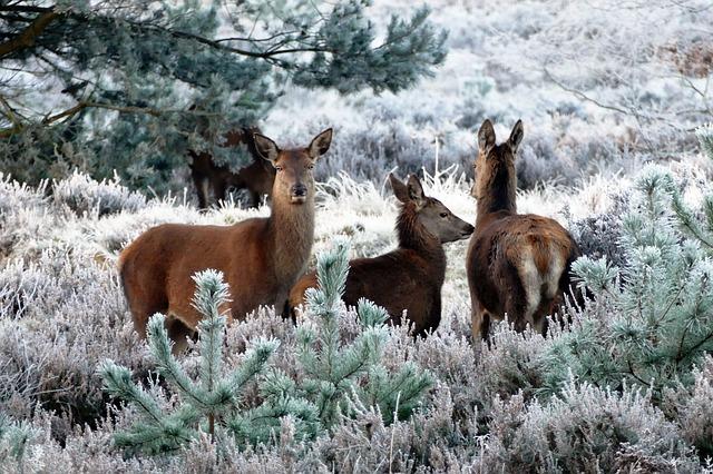 deer 1940368 640